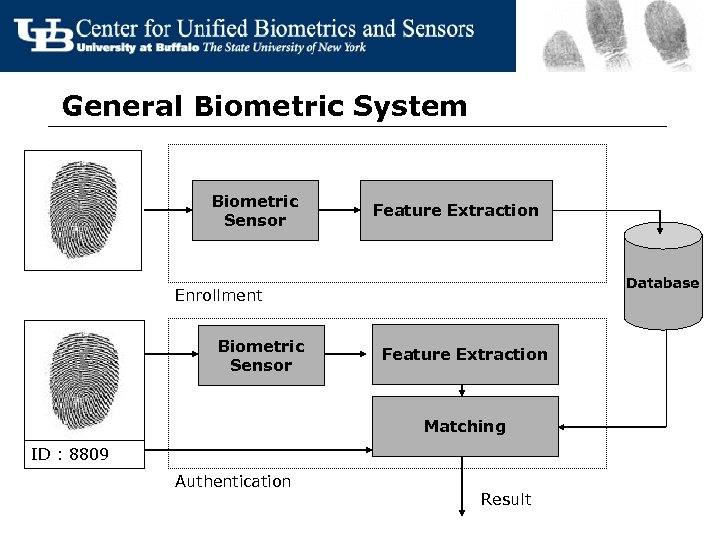 General Biometric System Biometric Sensor Feature Extraction Database Enrollment Biometric Sensor Feature Extraction Matching