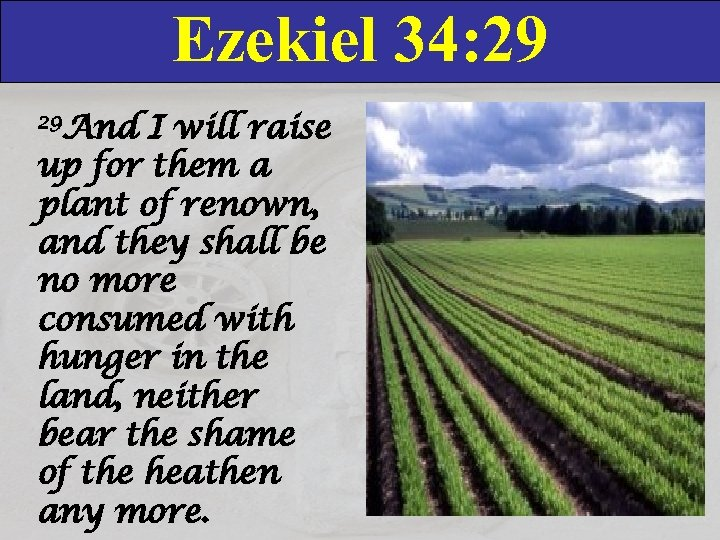 Ezekiel 34: 29 29 And I will raise up for them a plant of