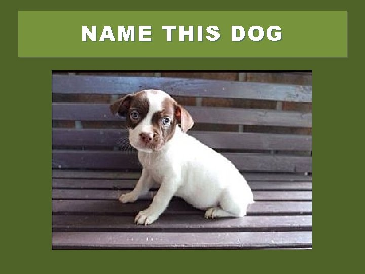 NAME THIS DOG