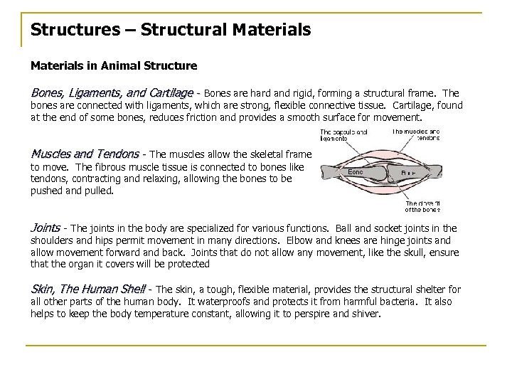 Structures – Structural Materials in Animal Structure Bones, Ligaments, and Cartilage - Bones are