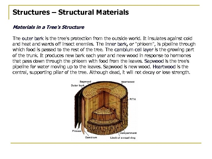 Structures – Structural Materials in a Tree's Structure The outer bark is the tree's