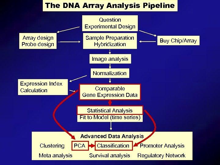 The DNA Array Analysis Pipeline Question Experimental Design Array design Probe design Sample Preparation