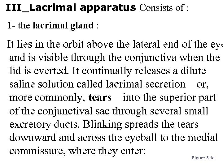 III_Lacrimal apparatus Consists of : 1 - the lacrimal gland : It lies in