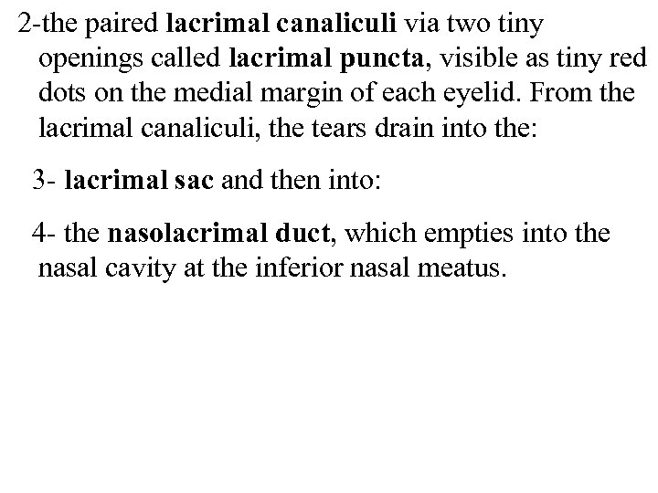 2 -the paired lacrimal canaliculi via two tiny openings called lacrimal puncta, visible as