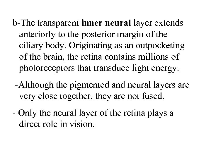 b-The transparent inner neural layer extends anteriorly to the posterior margin of the ciliary