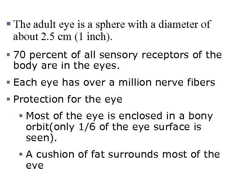 The Eye and Vision § The adult eye is a sphere with a diameter