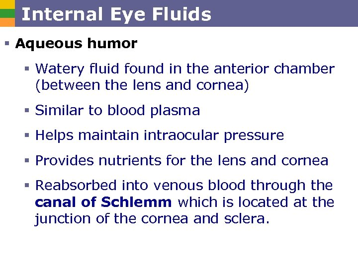 Internal Eye Fluids § Aqueous humor § Watery fluid found in the anterior chamber