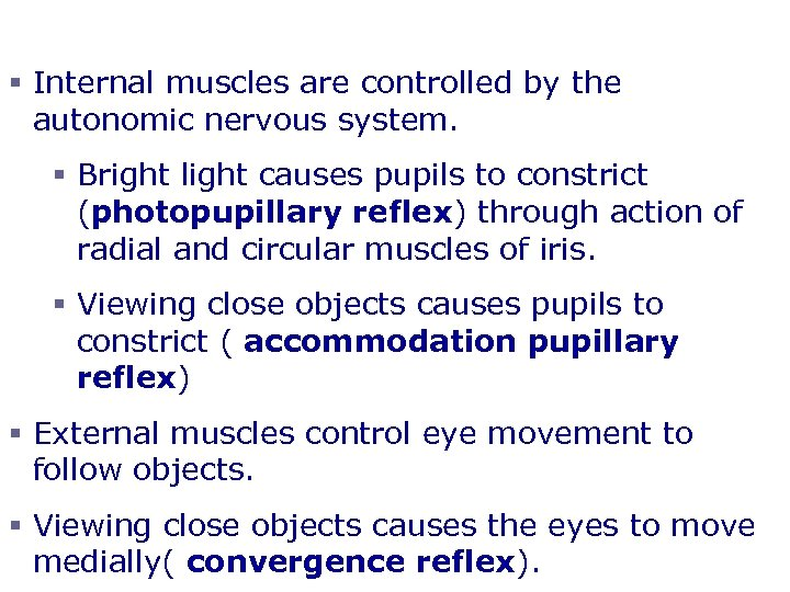 Eye Reflexes § Internal muscles are controlled by the autonomic nervous system. § Bright