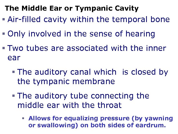 The Middle Ear or Tympanic Cavity § Air-filled cavity within the temporal bone §