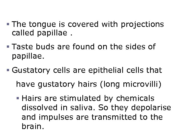The Tongue and Taste § The tongue is covered with projections called papillae. §