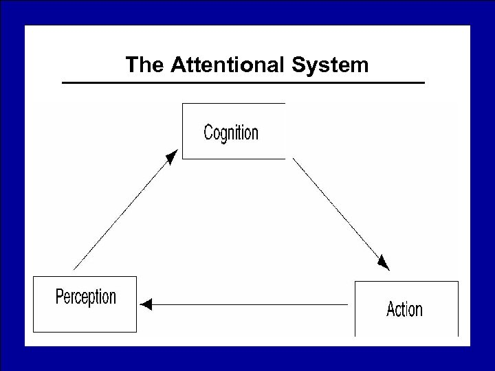 The Attentional System