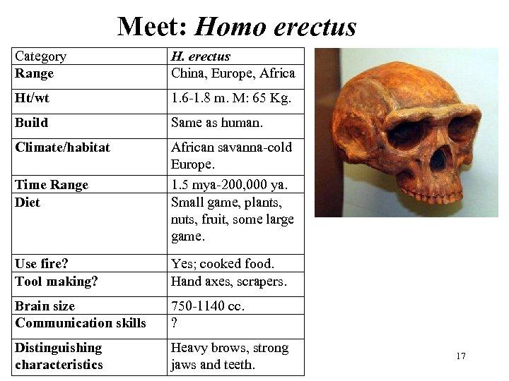 Meet: Homo erectus Category Range H. erectus China, Europe, Africa Ht/wt 1. 6 -1.
