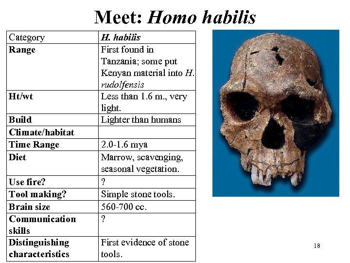 Meet: Homo habilis Category Range Ht/wt Build Climate/habitat Time Range Diet Use fire? Tool