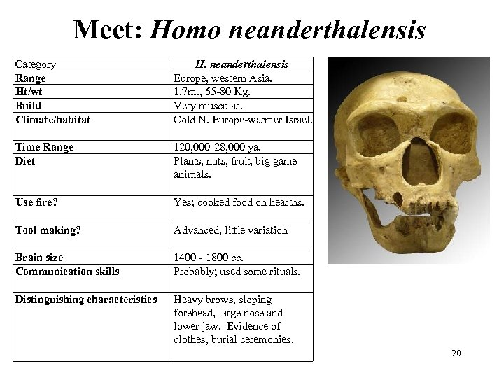 Meet: Homo neanderthalensis Category Range Ht/wt Build Climate/habitat H. neanderthalensis Europe, western Asia. 1.