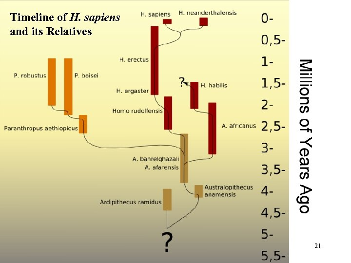 Timeline of H. sapiens and its Relatives 21