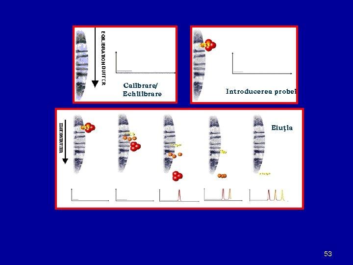 Calibrare/ Echilibrare Introducerea probei Eluţia 53