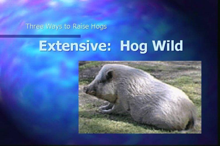 Three Ways to Raise Hogs Extensive: Hog Wild