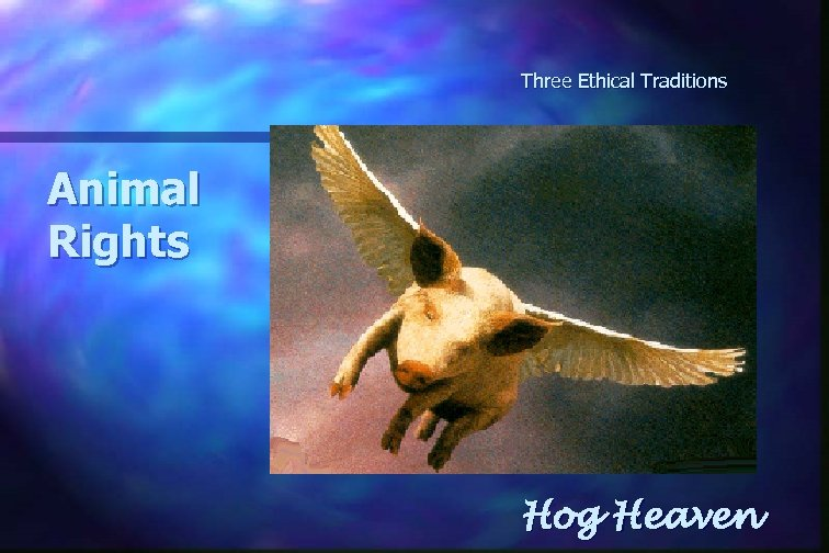 Three Ethical Traditions Animal Rights Hog Heaven