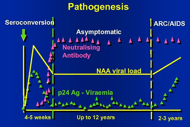 Pathogenesis Seroconversion ARC/AIDS Asymptomatic Neutralising Antibody NAA viral load p 24 Ag - Viraemia