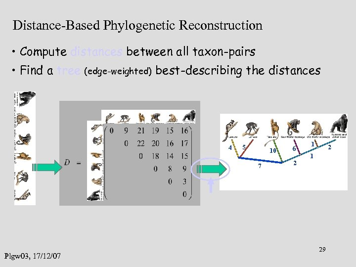 Distance-Based Phylogenetic Reconstruction • Compute distances between all taxon-pairs • Find a tree (edge-weighted)