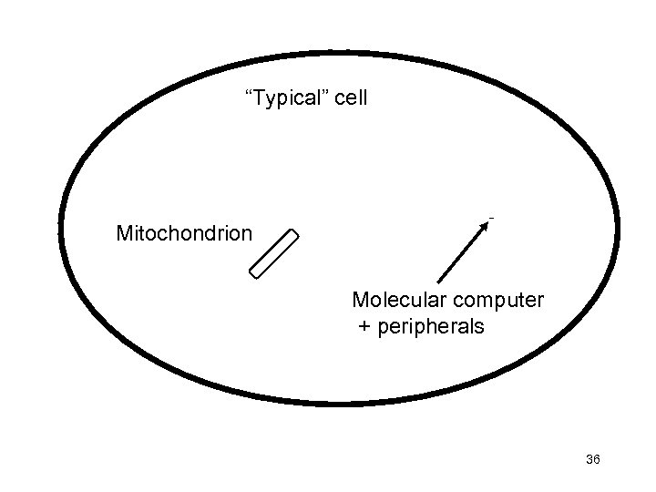 """Typical"" cell Mitochondrion Molecular computer + peripherals 36"