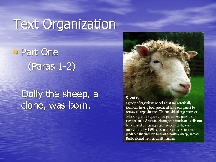 Text Organization • Part One (Paras 1 -2) Dolly the sheep, a clone, was