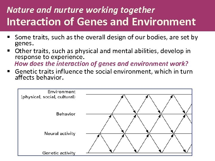 Nature and nurture working together Interaction of Genes and Environment § Some traits, such