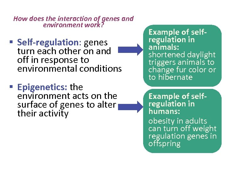 How does the interaction of genes and environment work? § Self-regulation: genes turn each