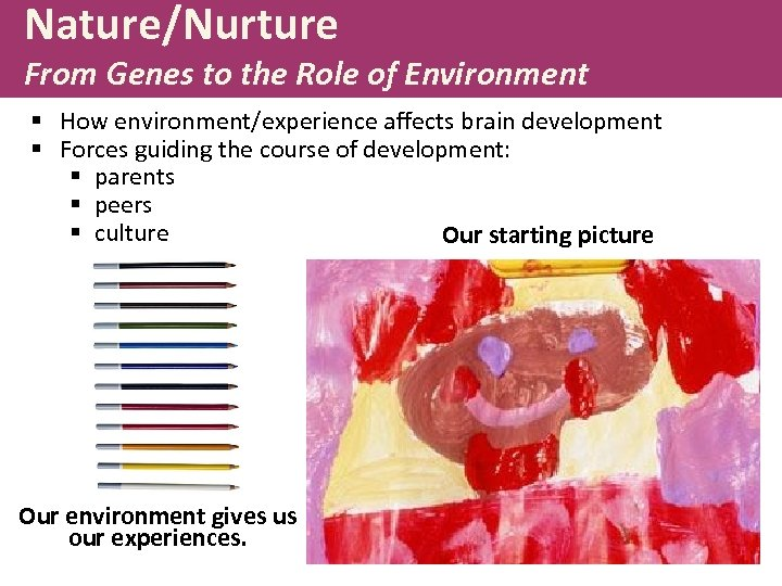 Nature/Nurture From Genes to the Role of Environment § How environment/experience affects brain development