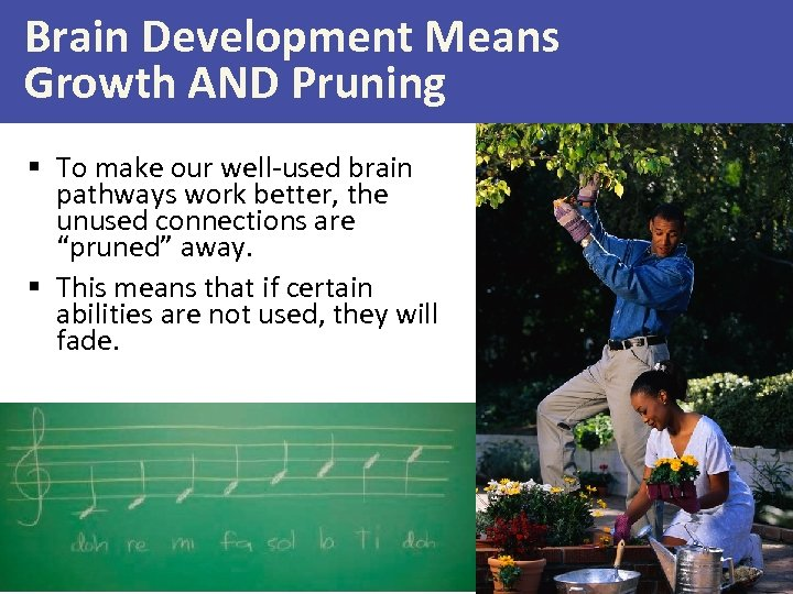 Brain Development Means Growth AND Pruning § To make our well-used brain pathways work