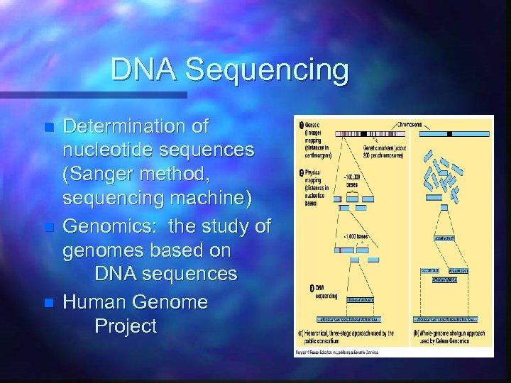DNA Sequencing n n n Determination of nucleotide sequences (Sanger method, sequencing machine) Genomics: