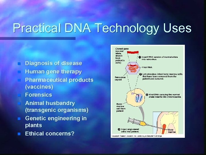Practical DNA Technology Uses n n n n Diagnosis of disease Human gene therapy