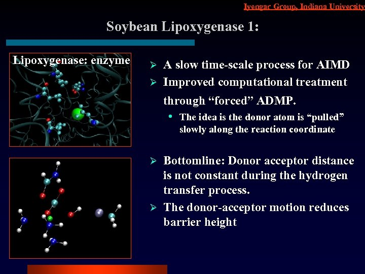 Iyengar Group, Indiana University Soybean Lipoxygenase 1: Lipoxygenase: enzyme A slow time-scale process for