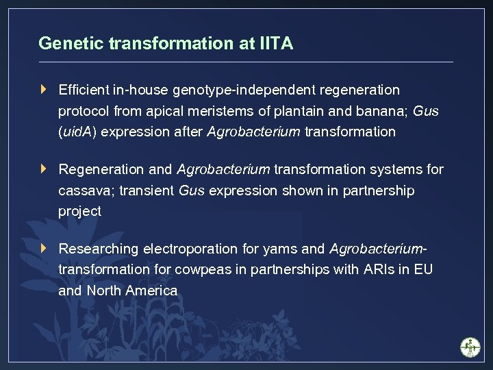 Genetic transformation at IITA } Efficient in-house genotype-independent regeneration protocol from apical meristems of