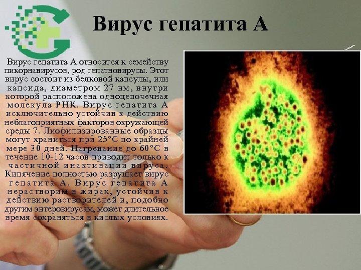 Вирус гепатита А относится к семейству пикорнавирусов, род гепатновирусы. Этот вирус состоит из белковой