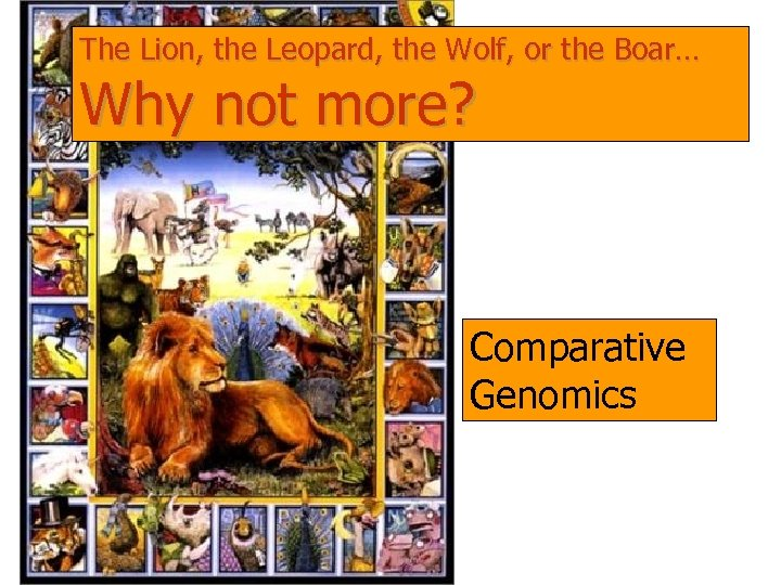 The Lion, the Leopard, the Wolf, or the Boar… Why not more? Comparative Genomics