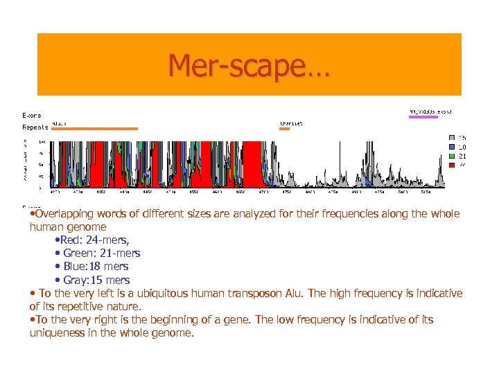 Mer-scape… • Overlapping words of different sizes are analyzed for their frequencies along the