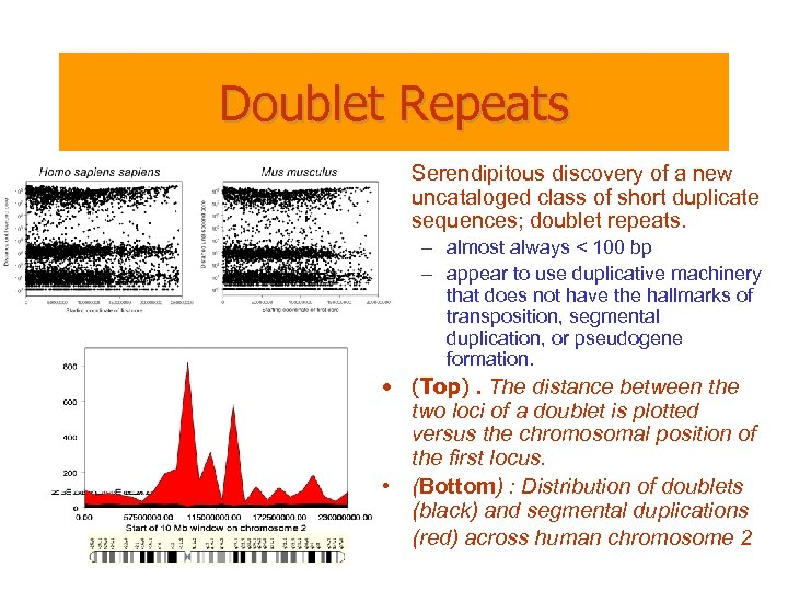 Doublet Repeats • Serendipitous discovery of a new uncataloged class of short duplicate sequences;