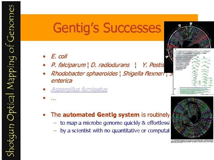 Shotgun Optical Mapping of Genomes Gentig's Successes E. coli • E. coli • P.