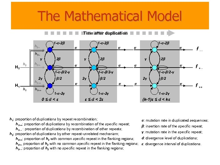 The Mathematical Model Time after duplication 1 -α-2β h 0 -- 1 -α-2β α