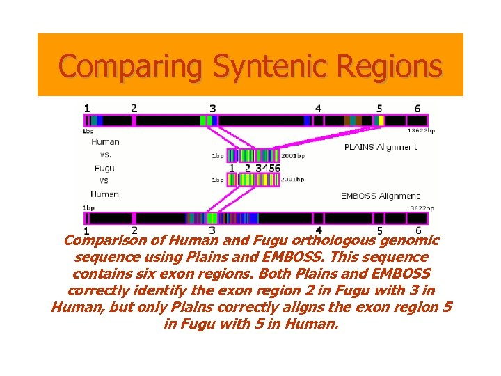 Comparing Syntenic Regions Comparison of Human and Fugu orthologous genomic sequence using Plains and