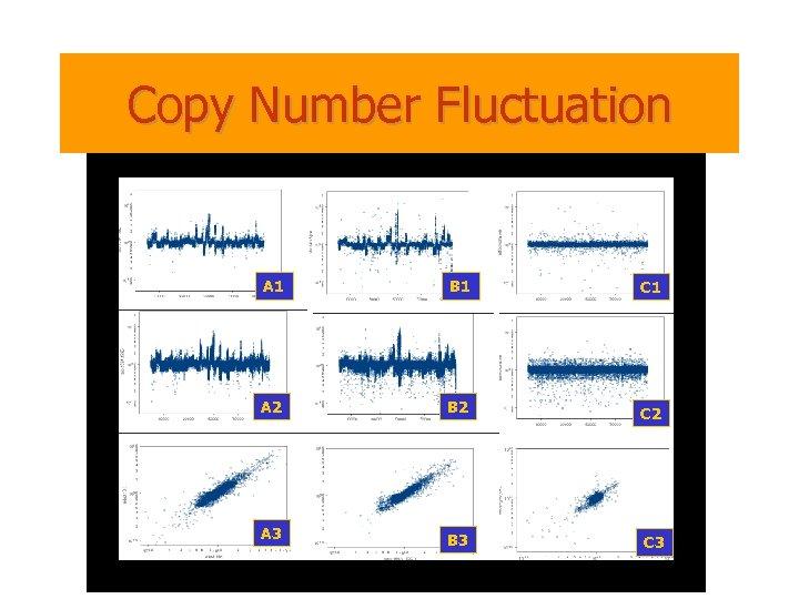 Copy Number Fluctuation A 1 B 1 C 1 A 2 B 2 C