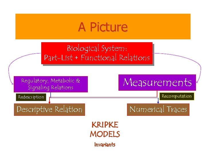 A Picture Biological System: Part-List + Functional Relations Measurements Regulatory, Metabolic & Signaling Relations