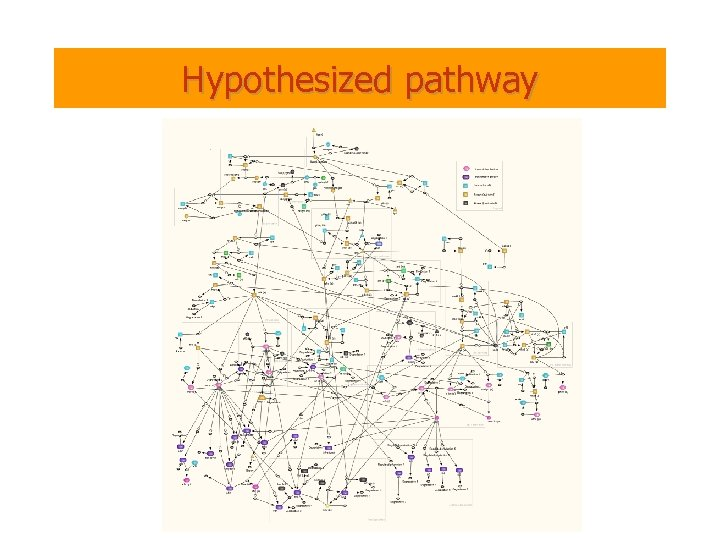 Hypothesized pathway
