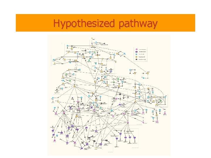 Hypothesized pathway