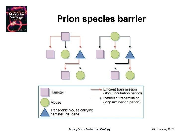 Prion species barrier Principles of Molecular Virology © Elsevier, 2011.