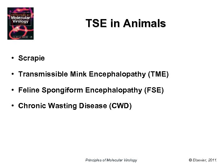 TSE in Animals • Scrapie • Transmissible Mink Encephalopathy (TME) • Feline Spongiform Encephalopathy