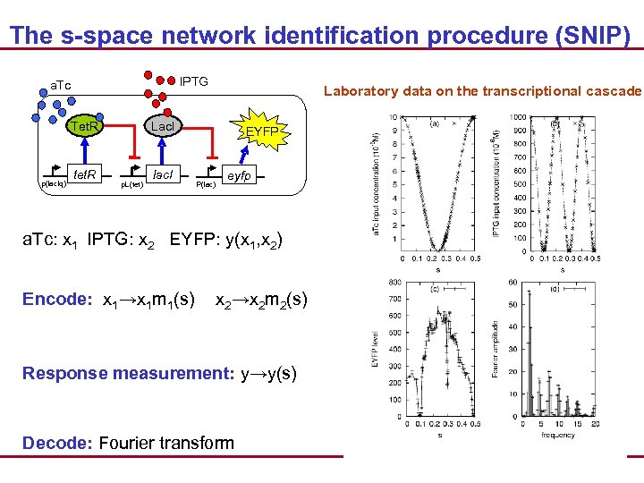 The s-space network identification procedure (SNIP) IPTG a. Tc Tet. R p(lac. Iq) tet.