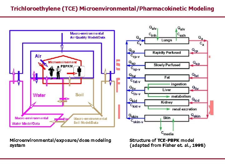 Trichloroethylene (TCE) Microenvironmental/Pharmacokinetic Modeling Microenvironmental/exposure/dose modeling system Structure of TCE-PBPK model (adapted from Fisher