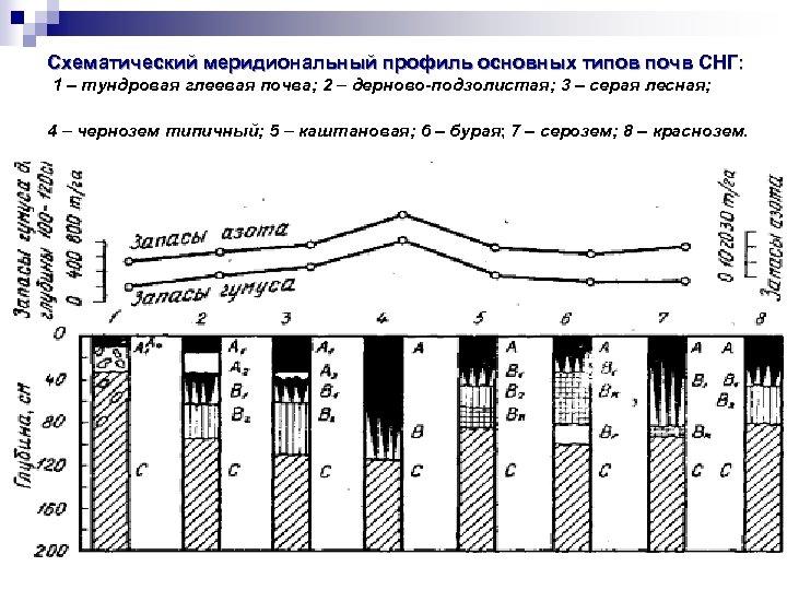 Схематический меридиональный профиль основных типов почв СНГ: 1 – тундровая глеевая почва; 2 –